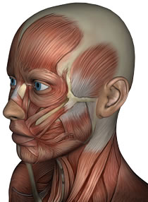 TMJ Pain After Whiplash